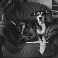 Liebe bis zum Schluss: Ihre emotionalen Bilder zeigen die letzten Tage mit ihrer kranken Hündin