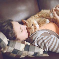 Kein Witz: Bei diesem Job werdet ihr bezahlt, um den ganzen Tag mit Katzen zu kuscheln