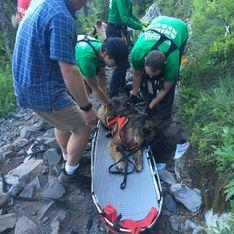 Unglück in den Bergen: Bei einer Wanderung kollabiert plötzlich sein Vierbeiner...