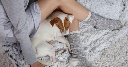 Dating fur hundefreunde
