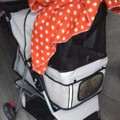 Was Passanten in diesem Kinderwagen entdecken, bricht uns das Herz
