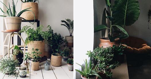 Welche Pflanze für welches Zimmer? 7 geniale und nützliche Ideen