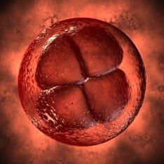 1a semana: primer mes de embarazo