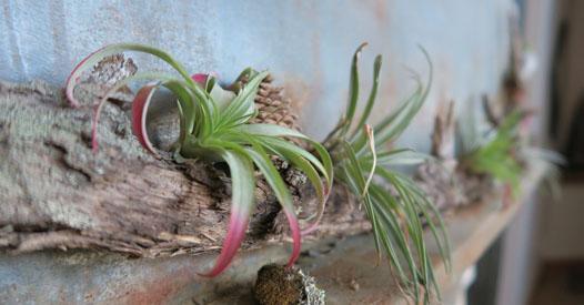 Pflanzen Furs Bad Diese 7 Gewachse Eignen Sich Perfekt