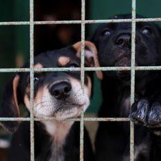 La Corée du Sud va-t-elle enfin interdire le meurtre de chiens pour leur viande ?