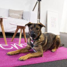 Warum ein Bürohund dein Leben verbessert (& was ihr als Hundebesitzer beachten müsst)