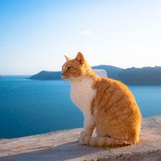 S'occuper de 55 chats en Grèce ? On a trouvé LE job de rêve !