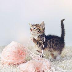 5 jouets pour divertir votre chat