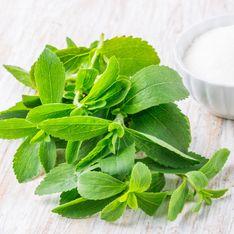 Stévia, rapadura, sirop d'agave, que valent les sucres alternatifs ?