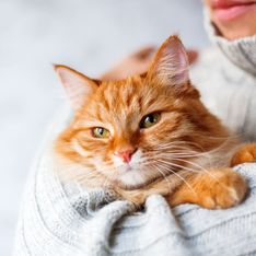 Katzenhaare entfernen: Diese Tricks helfen wirklich