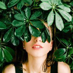 Genügsame Genossen: 6 Zimmerpflanzen, die wenig Licht brauchen