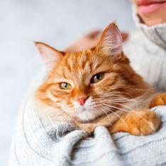 ¿Cómo eliminar el pelo de tus mascotas en casa?