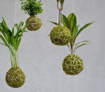 DIY : créez un kokedama, la plante déco sans pot
