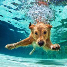 Elle photographie des chiens handicapés pour révéler toute leur beauté