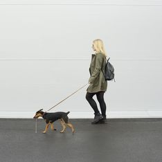 Promener des chiens pour combattre la dépression, la bonne idée de cette université