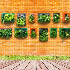 Crea tu jardín vertical en casa, esto es todo lo que necesitas