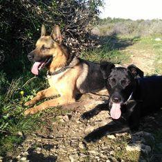 À Marseille, ils lancent une cagnotte pour offrir aux chiens policiers une fin de vie paisible