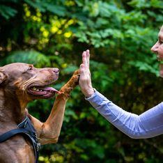 Los mejores arneses de perros del 2019 para cada situación