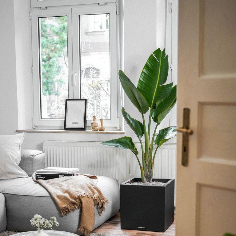6 Bonnes Raisons De Mettre Des Plantes Dans Sa Déco