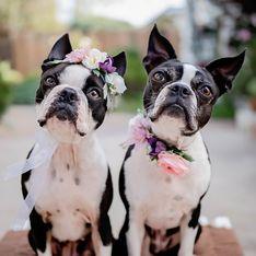 Test di coppia: l'animale che scegli svela come sei nella relazione
