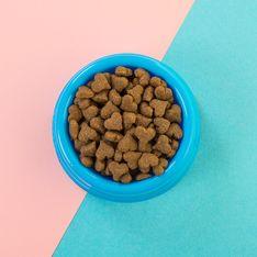Katzenfutter Test 2020: Das beste Nassfutter für eure Katze