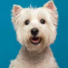 6 Fehler, die Besitzer von kleinen Hunden immer wieder machen