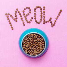 Alimenti per gatti di alta qualità: come nutrire correttamente i tuoi amici a quattro zampe