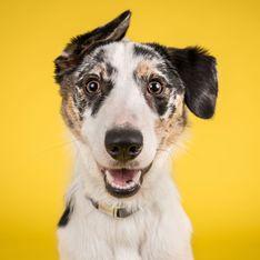 Hund bei Hitze abkühlen: Mit diesen Tricks übersteht er den Sommer