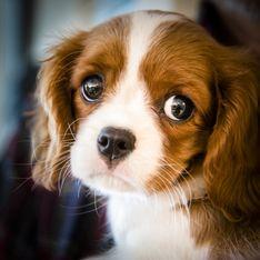 Un projet de loi pour lutter contre les abandons massifs d'animaux domestiques