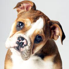 Treuer Hundeblick: Darum können wir den Vierbeinern nicht widerstehen