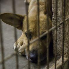 8000 animaux ont déjà été abandonnés depuis le début de l'été