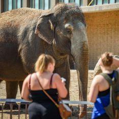 Bientôt l'interdiction de la vente d'éléphants à des zoos?