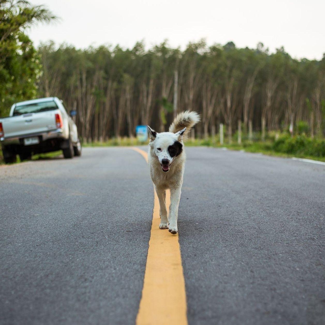 Un homme crée l'indignation en traînant son chien à l'arrière de sa voiture