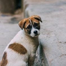 Aux États-Unis, la maltraitance animale est désormais un crime passible de prison