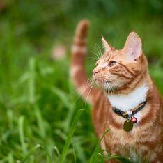 Laisser son chat dehors en liberté est en fait interdit en Europe