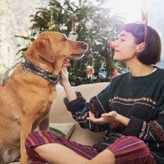 Estos son los alimentos que no debes dar a tu perro esta Navidad
