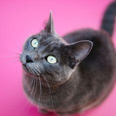 Katzen für Allergiker: Eignen sich diese Rassen wirklich?