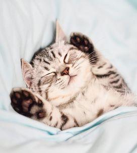 La couverture lestée pour mieux dormir, ça fonctionne vraiment ?