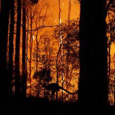 24 personnes arrêtées pour incendie volontaire en Australie