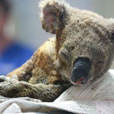 En Australie, ces deux adolescents volent au secours des koalas pris au piège dans les incendies