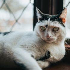 Soñar con ratones y gatos: ¿significado positivo o negativo?