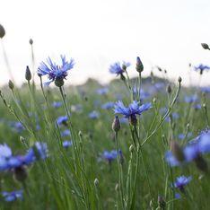 Les bienfaits de l'eau de bleuet pour la peau