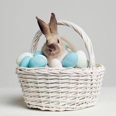 En Nouvelle-Zélande, le lapin de Pâques est un travailleur essentiel