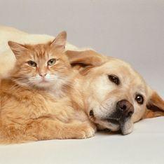 Les chiens et les chats exclus de la liste des animaux comestibles en Chine