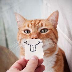 Schon gewusst? Diese 10 Dinge mögen Katzen nicht