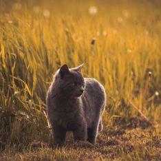 Les meilleures recettes de répulsifs naturels pour éloigner les chats