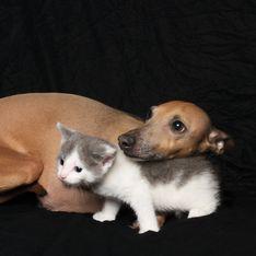 Les adoptions, espoir d'une seconde vie pour les 2 millions d'animaux de laboratoire