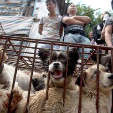 Le festival (de l'horreur) de la viande de chien en Chine une nouvelle fois ouvert