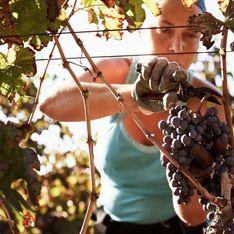 Le seul moment où les femmes sont reconnues dans la vinification, c'est quand leurs maris sont morts