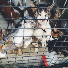Qu'est-ce que le syndrome de Noé, mentionné dans une affaire de chats congelés ?
